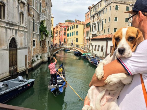 travel with dogs to Italy