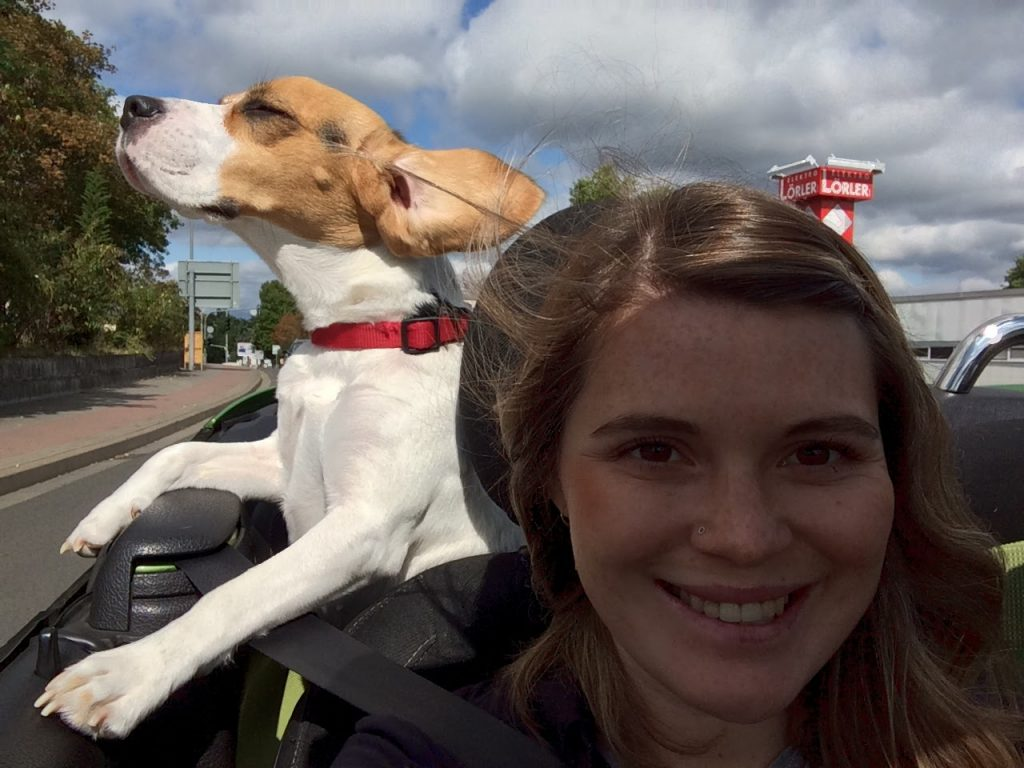 how to travel with dogs on a car
