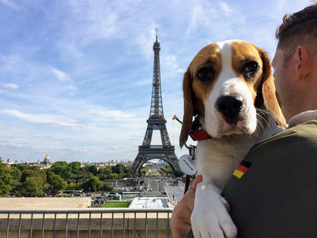 travel with dogs to Paris