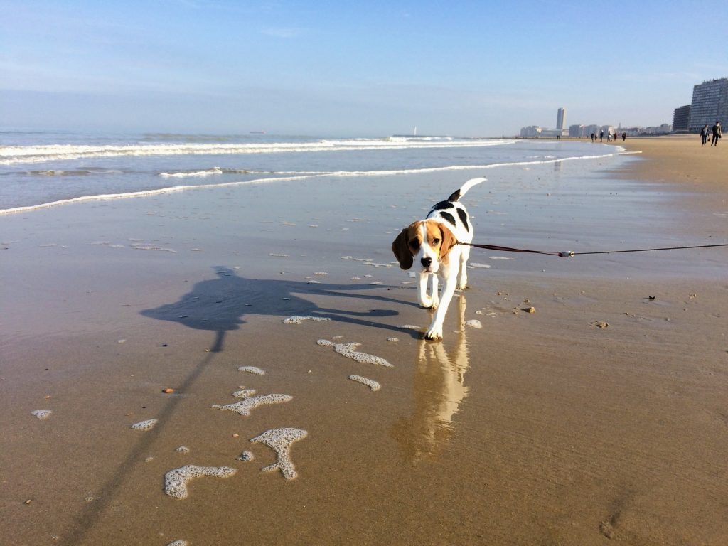 travel with a dog tips