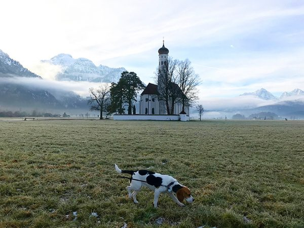 Winter morning in Allgäu
