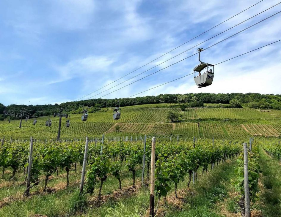 10 things to do in Rüdesheim and Bingen on the Rhine